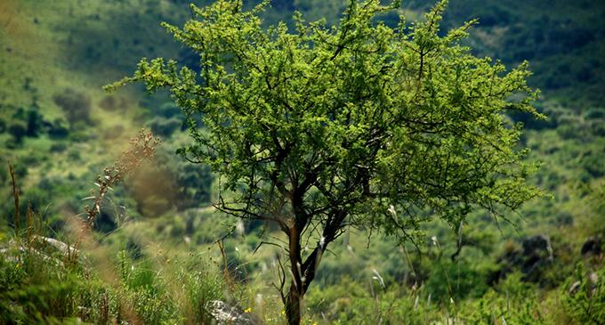Los bosques nativos de Córdoba en peligro | Notas